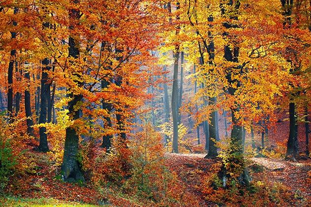 Autumn Forest 001