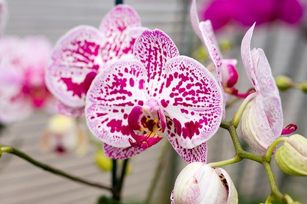 Orchids 002