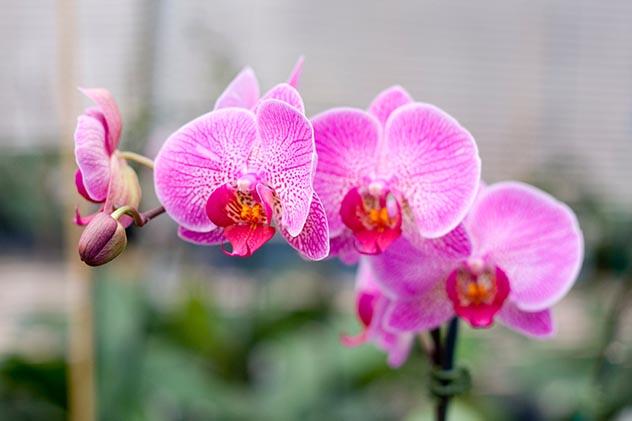 Orchids 001