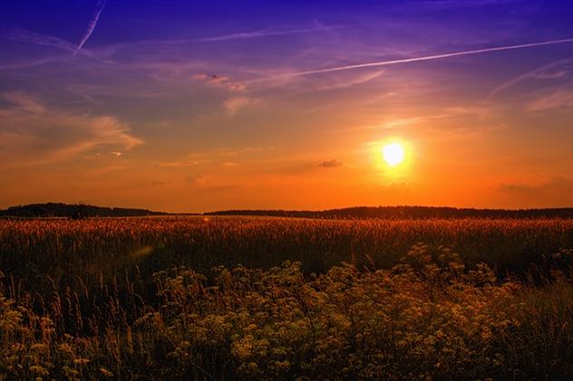 Sunset Wheat 001