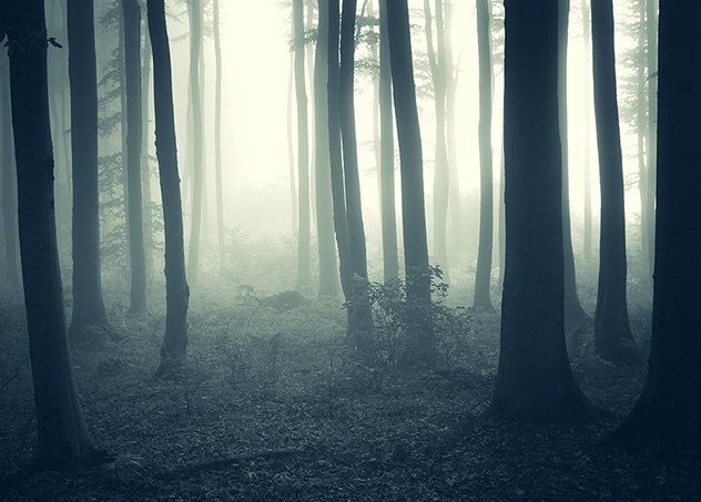 Foggy Forest 004