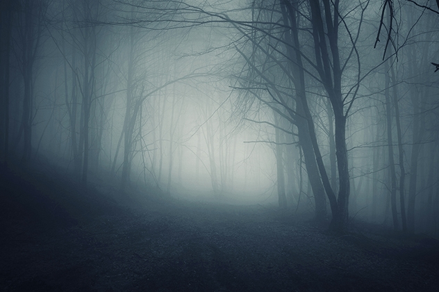 Foggy Forest 001
