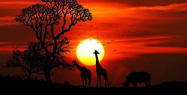 Africa 001